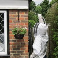 wasp nest removal in caterham